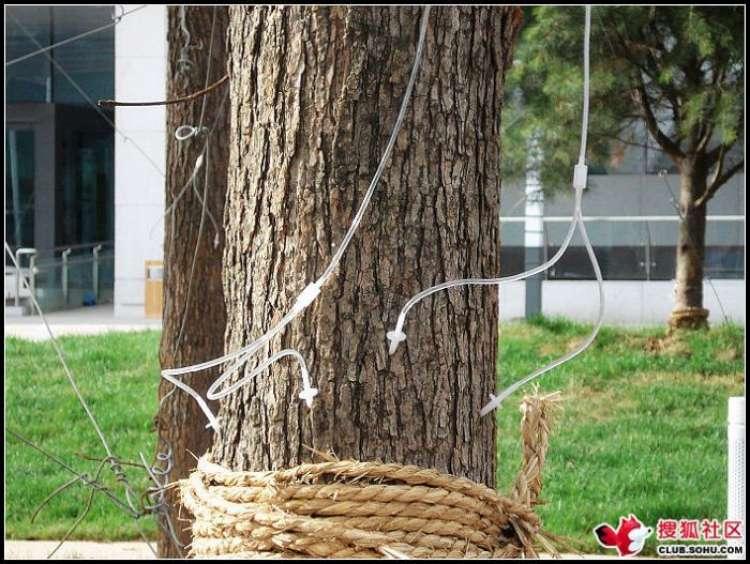 trees-feeding-14