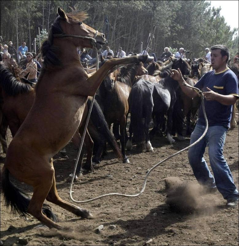 как ловят лошадей