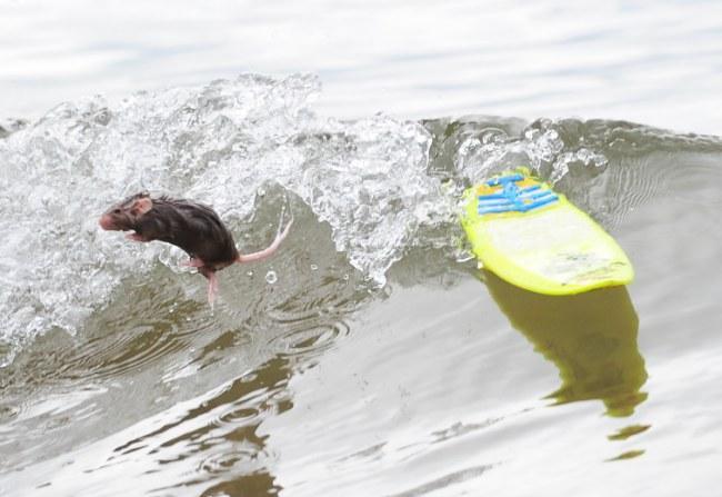 surfing-mice-02