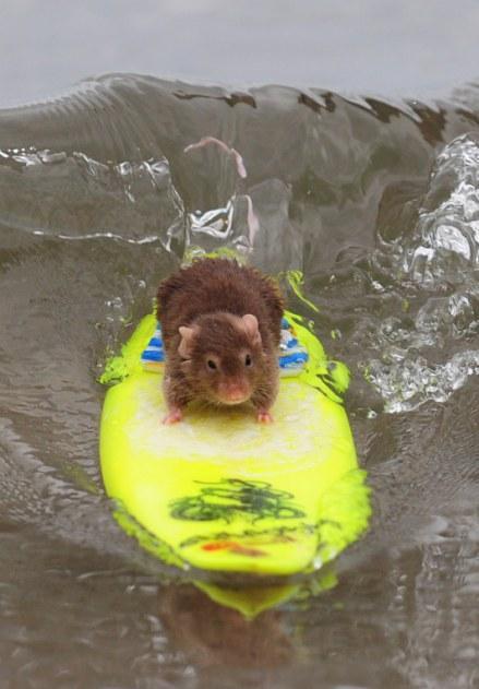 surfing-mice-03