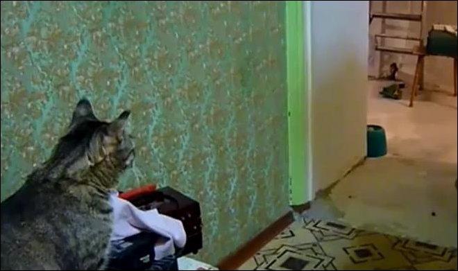 Кот и мобильный телефон