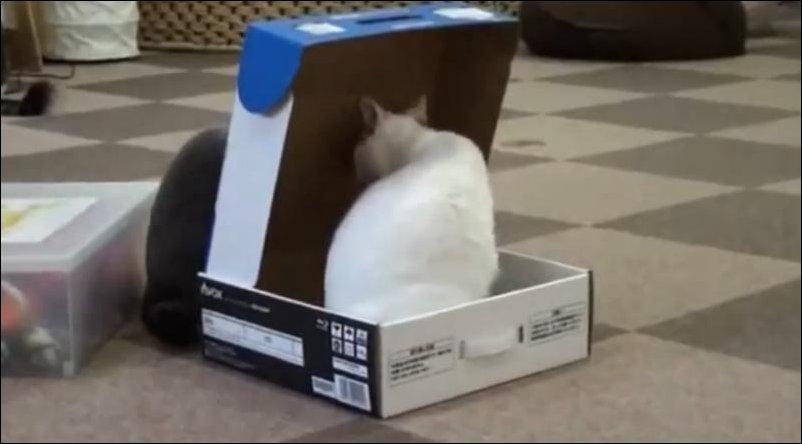 Кот упаковал кота