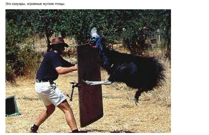 Австралийская фауна