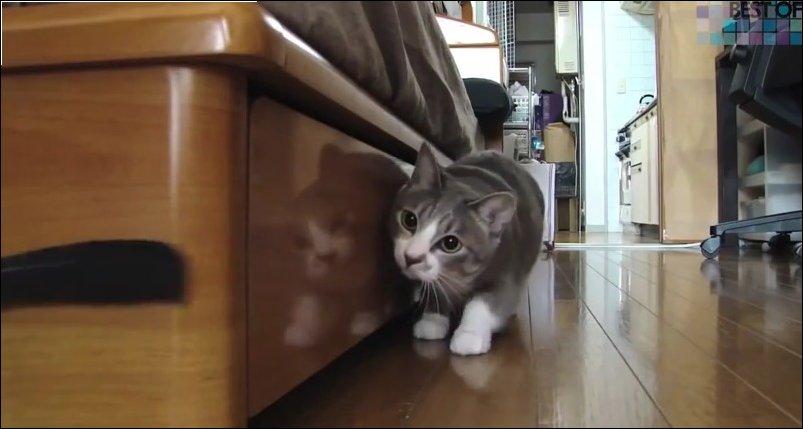 Лучшие коты Youtube