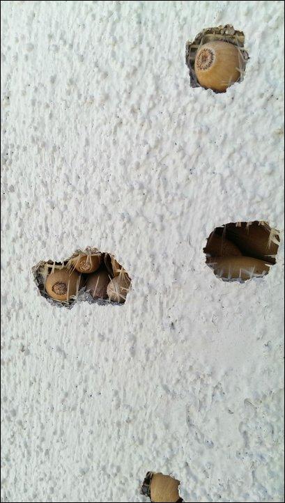 Банда дятлов напала на дом