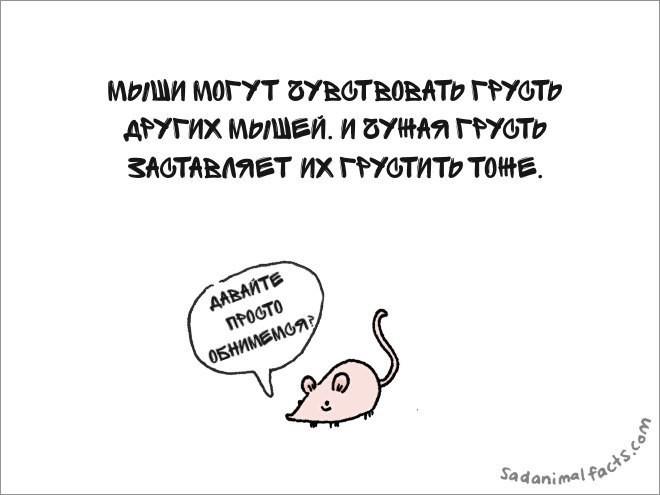 Грустные факты о животных