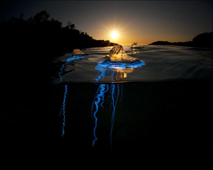 Мир под водой