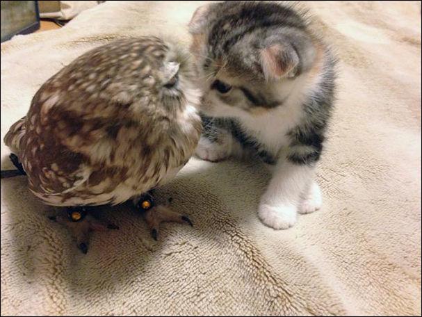 Котенок и совенок