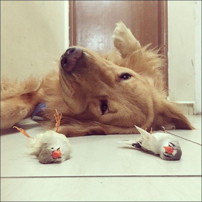 Собака хомяк и попугаи