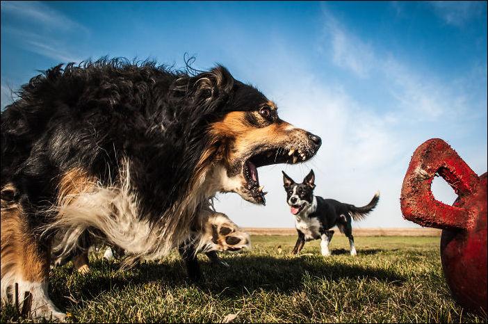 Ракурс делающий собак гигантами