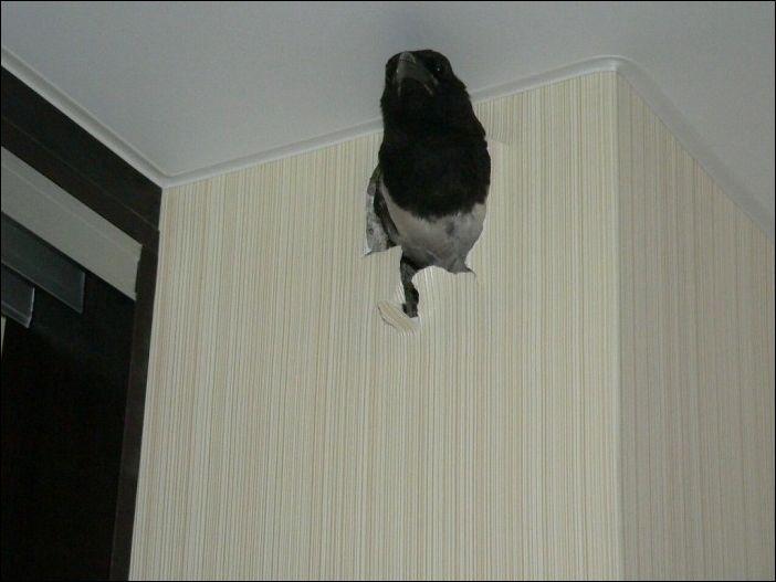 Птица в стене