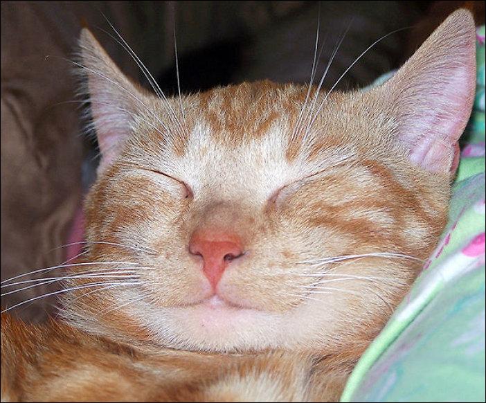 Кот улыбается