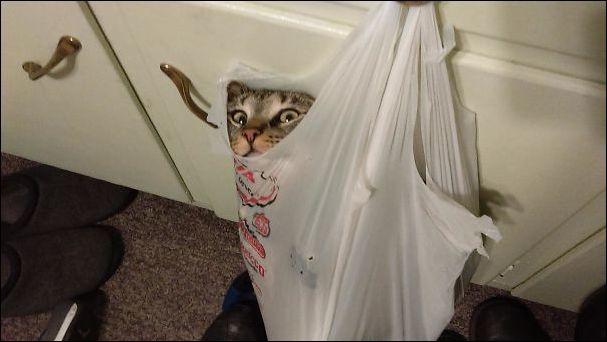 смешные коты и кошачья мята