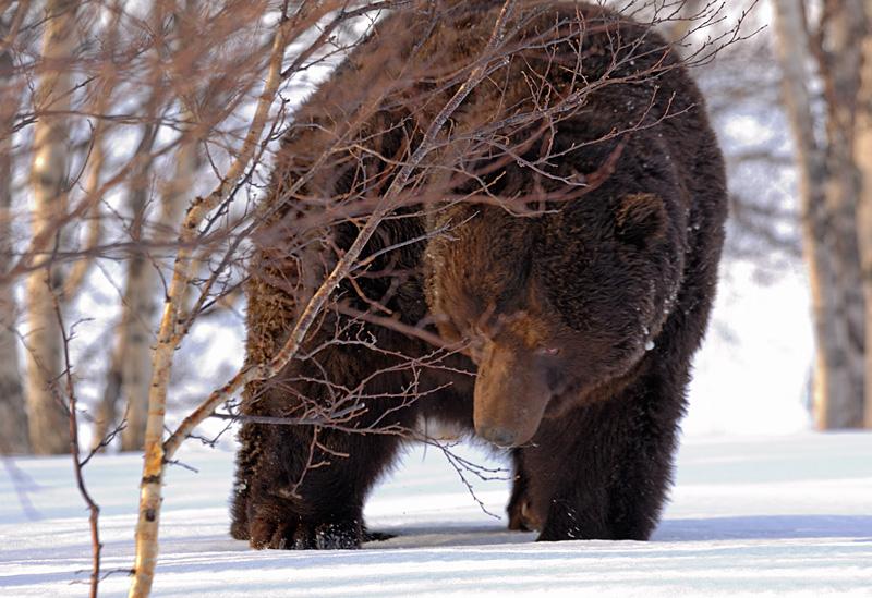 bears-wakeup-02