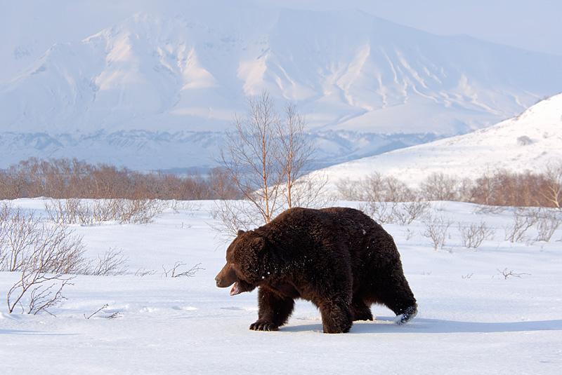 bears-wakeup-03