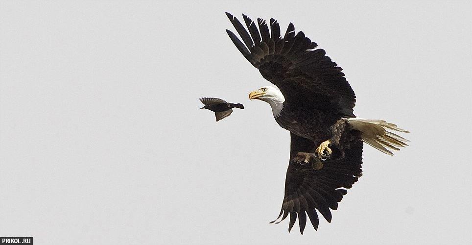 eagle-hunt-04