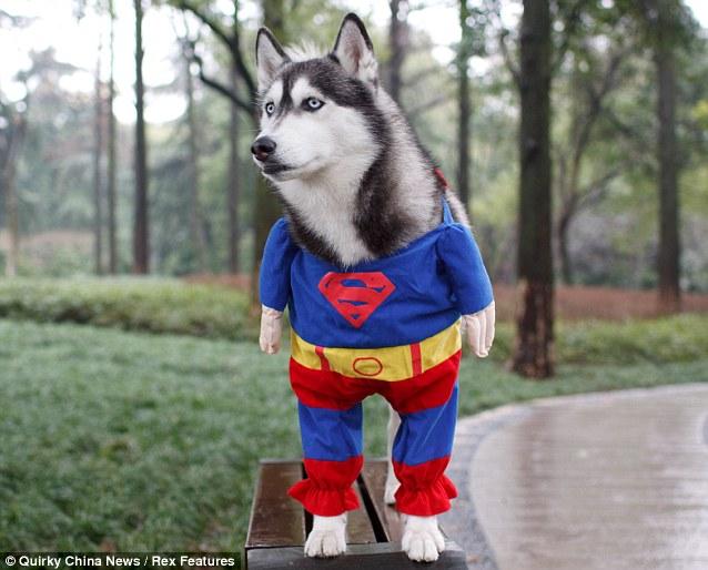 superdog-01