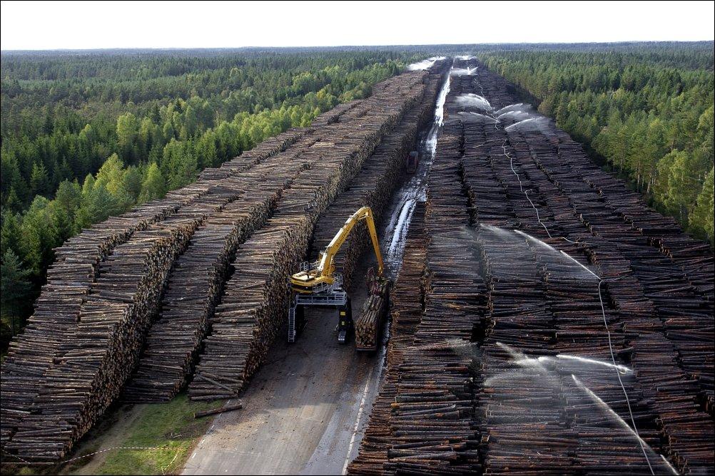 Самое большое в мире хранилище древесины