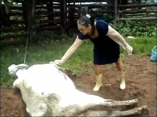 Погладь корову