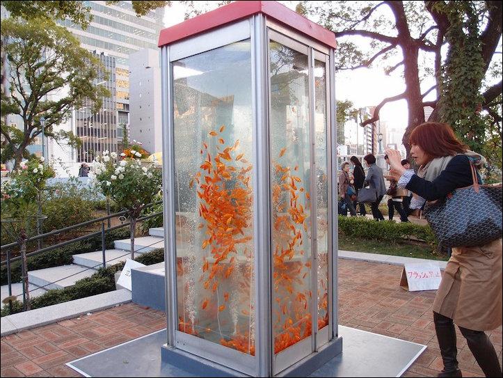 Телефонная будка - аквариум