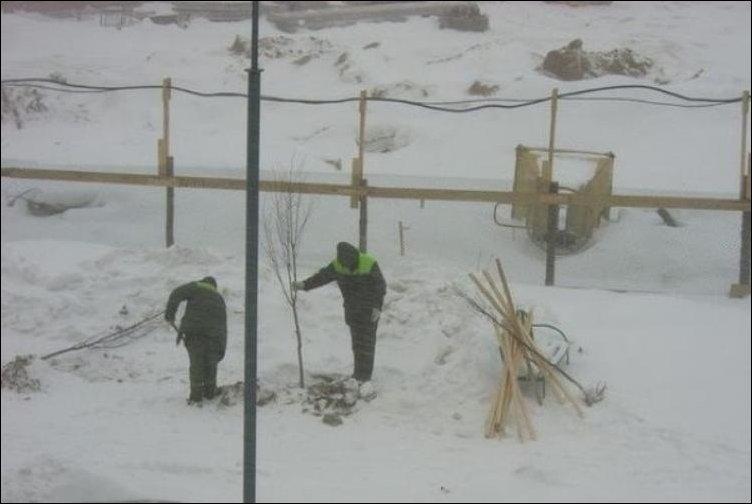 Коммунальщики сажают деревья несмотря на погоду