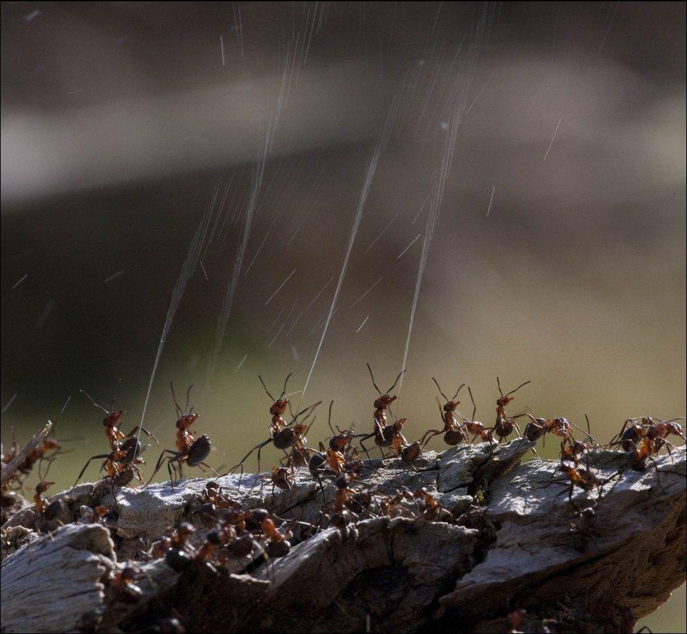 время птицы в картинках муравей очистить костей