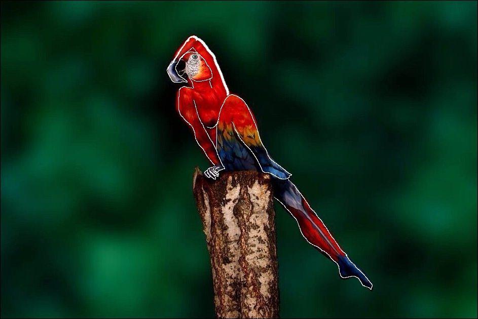 Женщина попугай