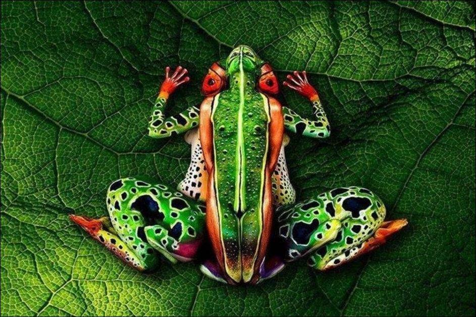 Женщина лягушка