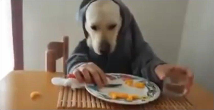 Собака ест как человек