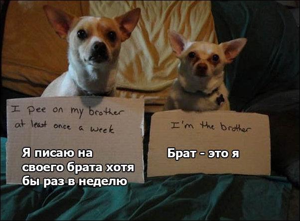 Собачьи признания