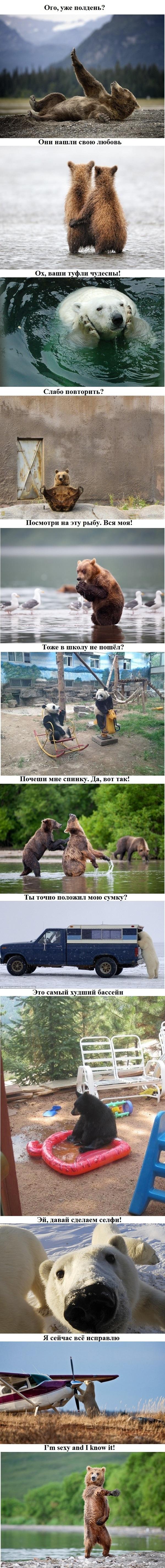 Смешные медведи