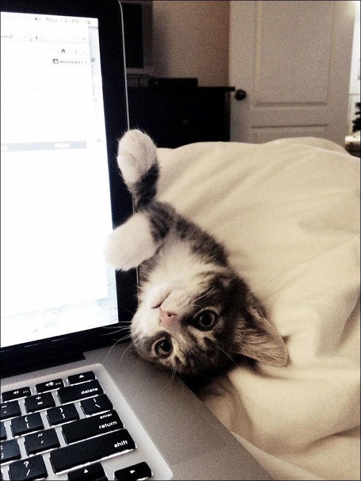 Кот мешает читать