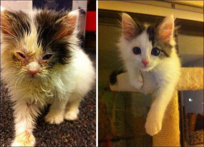 Кошки до и после обретения хозяев