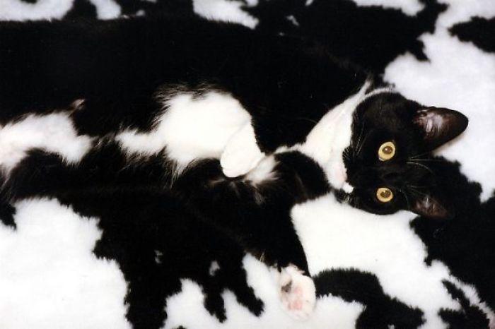 Коты маскировка