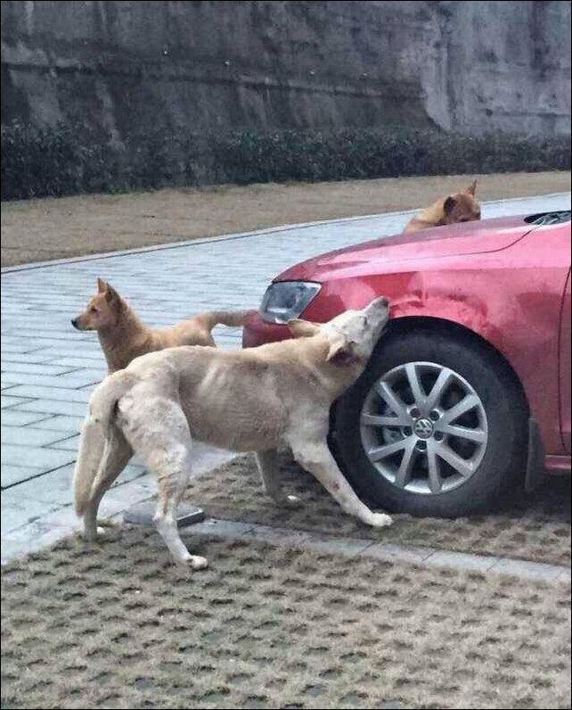 Собака пожевала автомобиль