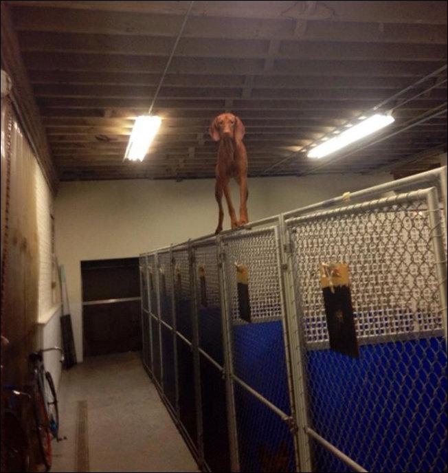 Собачьи неприятности