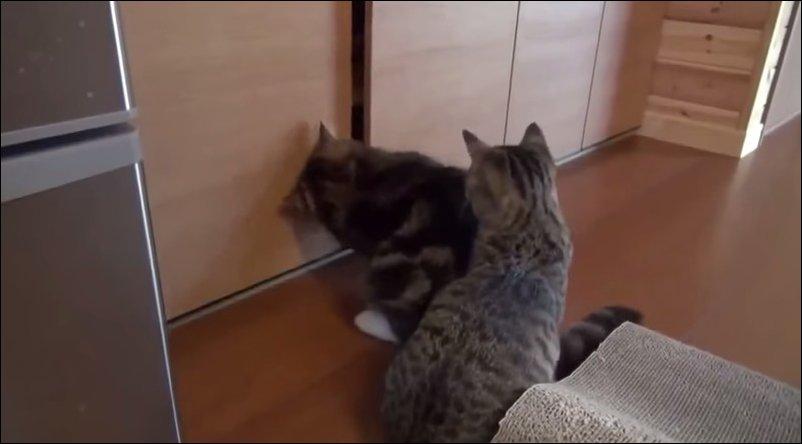 Кошачий эгоизм