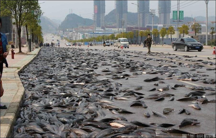 В Китае грузовик рассыпал рыбу