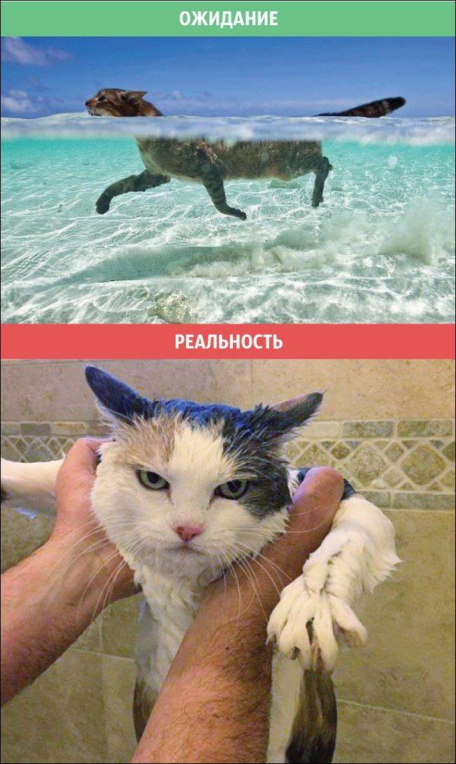 Коты - ожидание и реальность