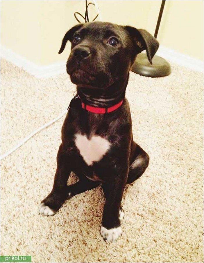 Собака с необычным окрасом шерсти