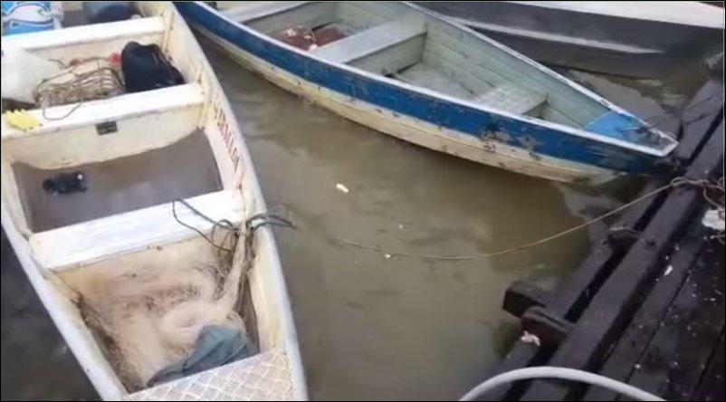 Как кормят пираний в Бразилии
