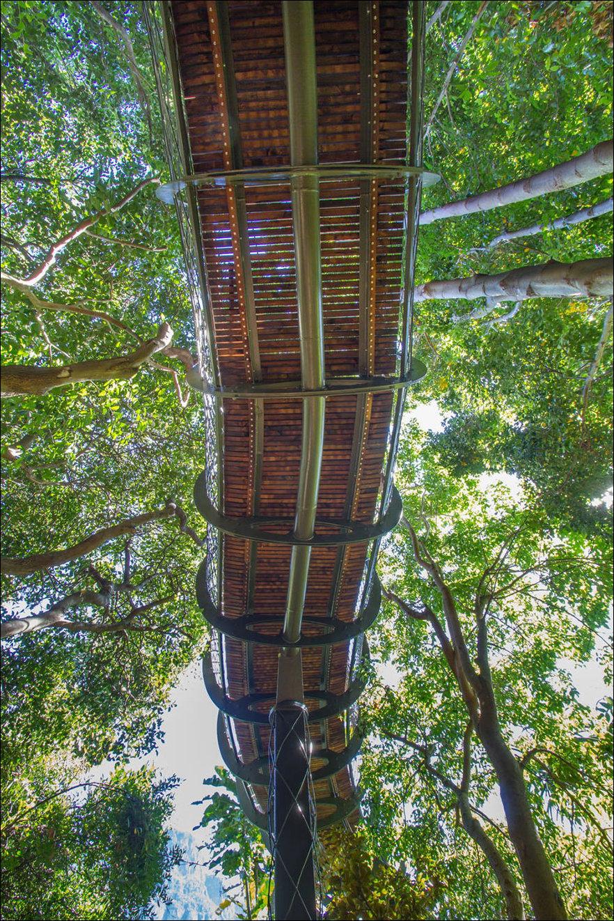 Прогулка среди крон деревьев