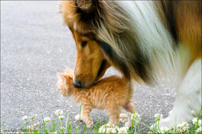 dog-n-kitten-05