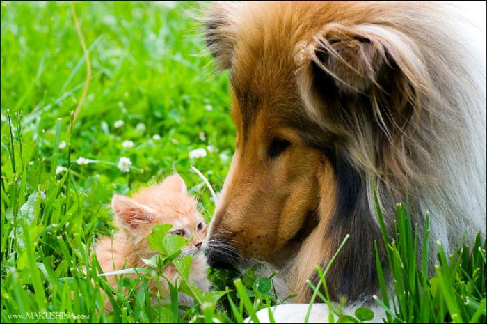 dog-n-kitten-06