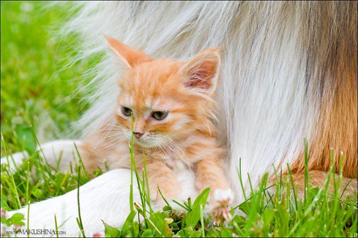 dog-n-kitten-09
