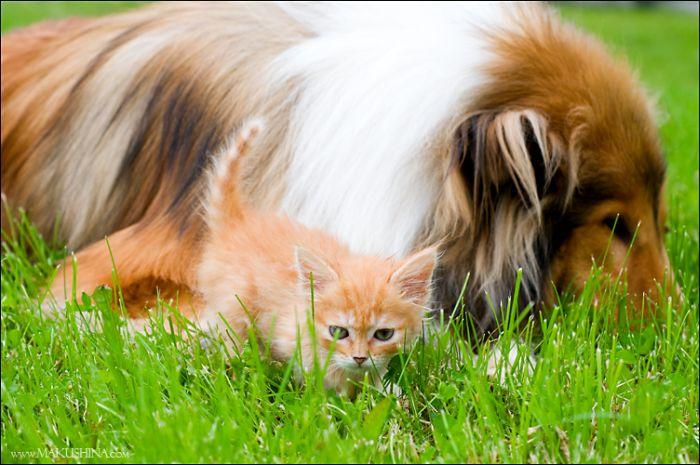 dog-n-kitten-12