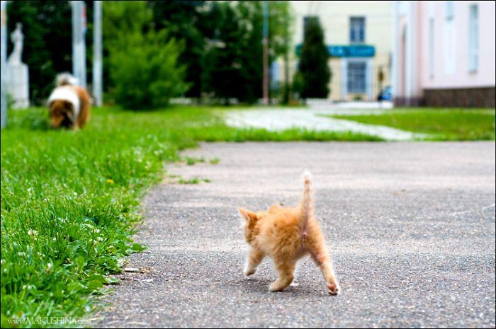 dog-n-kitten-13