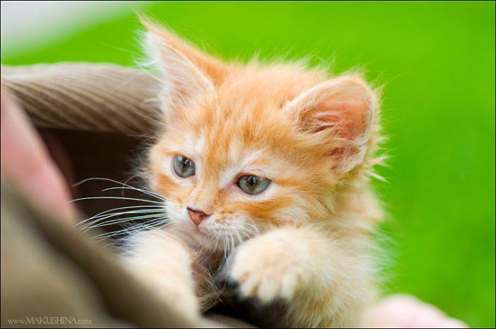 dog-n-kitten-14