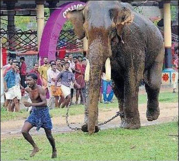 elephant-rage-01