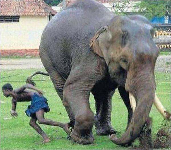 elephant-rage-05
